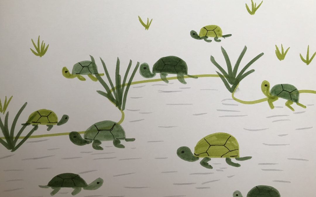 How to Draw Turtles and Tortoises