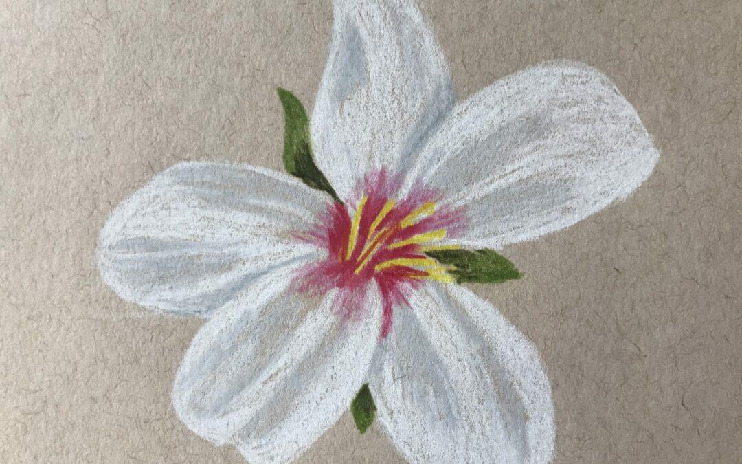"""""""Almond Blossom"""" Colored Pencil Art"""